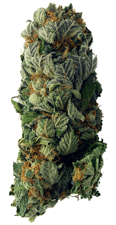weed-vertical-400-min