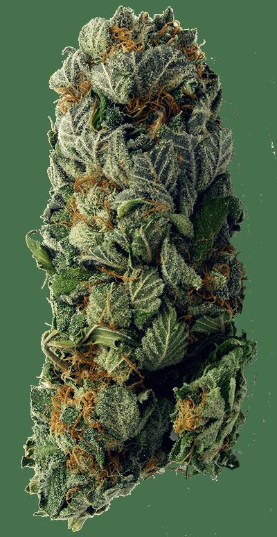 weed-vertical-400-min